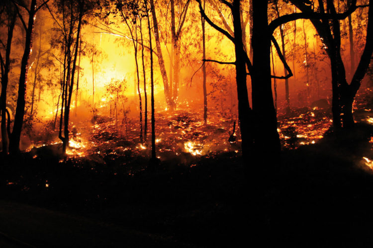 Incendio bosque