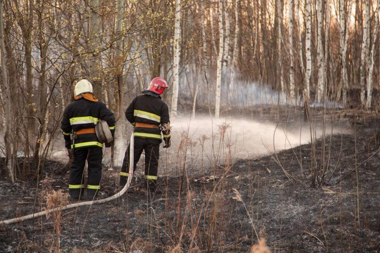 Efectivos lucha contra incendios forestales
